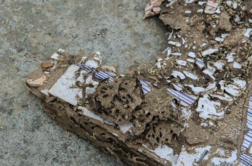 termites-damage