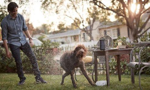 Bose splashy dog